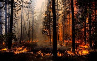 На территории Увельского района введен особый противопожарный режим