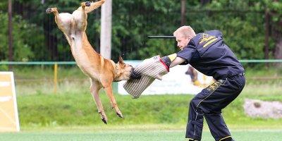 В п.Увельский пройдут соревнования по дрессировке собак