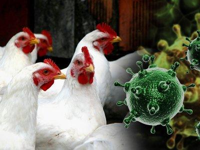 Южноуральская межрайонная ветеринарная станция сообщает о возникновении  гриппа птиц у дикой водоплавающей птицы