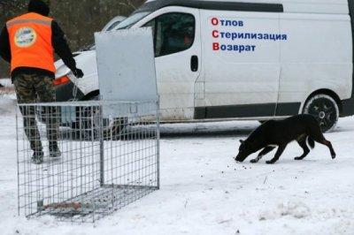Куда обращаться в случае агрессивного поведения безнадзорных животных?