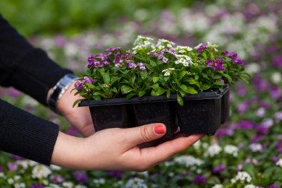 Подари цветы новому скверу!