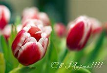 Милые женщины! Примите наши искренние поздравления с первым весенним праздником – светлым днем 8 Марта!