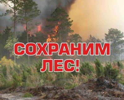 Соблюдение требований пожарной безопасности в лесах