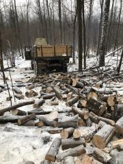 Вырубка деревьев Аша